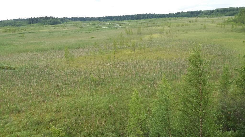 Näkymä2 Koijärven lintutornista 4.7.2018
