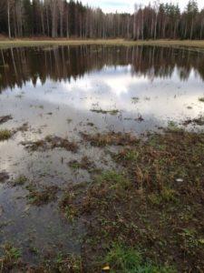 Kipsikäsittely estää maan huuhtoutumista ja vaikuttaa positiivisesti maatalouden vesistöpäästöihin. Kuva: Minna Kolari.